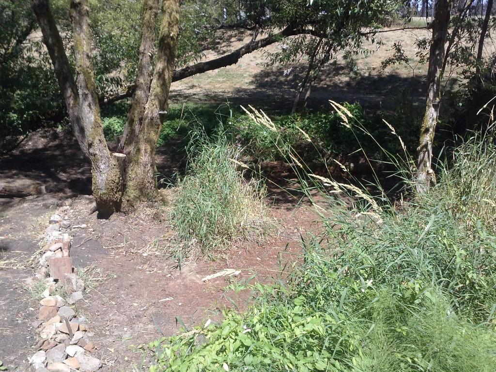 Degoba in summertime swamp fort